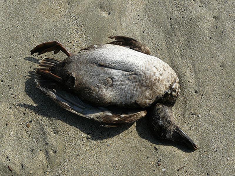 beach 7 43 причины ненавидеть пляж