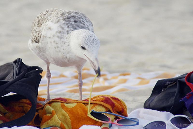 beach 9 43 причины ненавидеть пляж