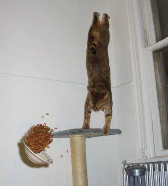 cats 10 Мега фотографии котиков, сделанные в нужный момент