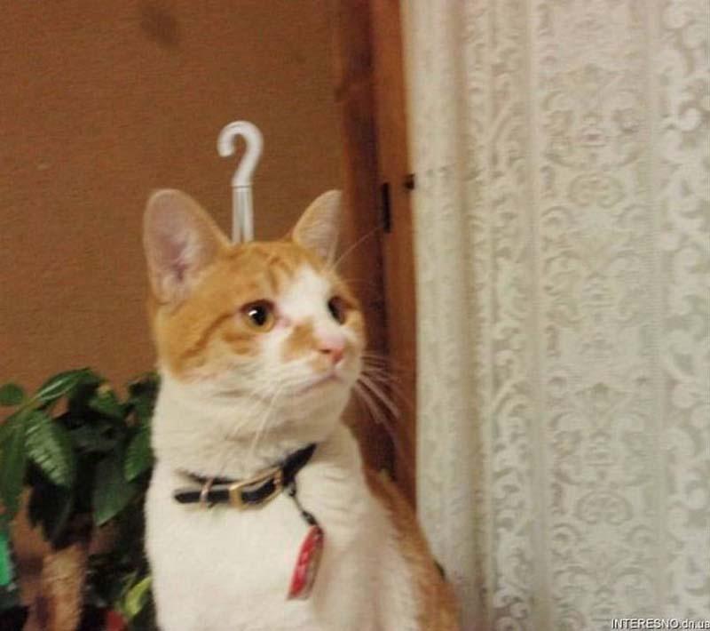 cats 11 Мега фотографии котиков, сделанные в нужный момент