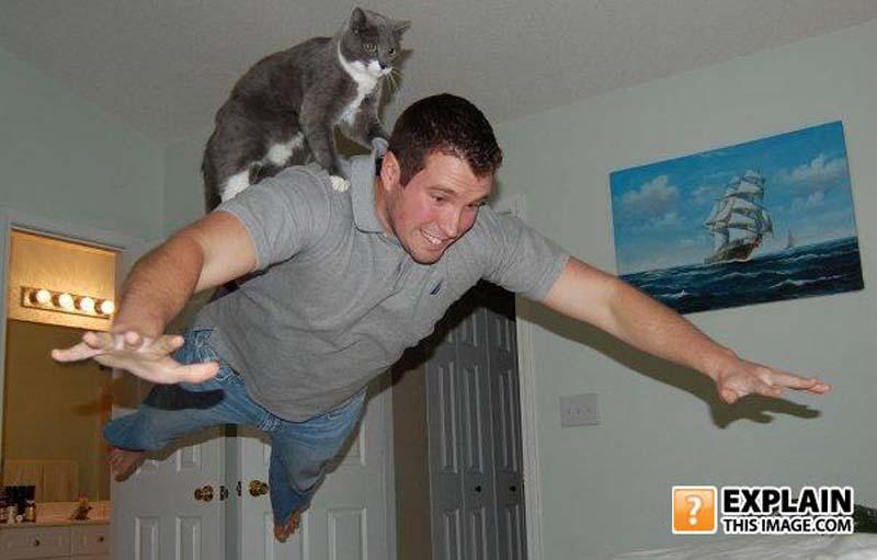 cats 12 Мега фотографии котиков, сделанные в нужный момент