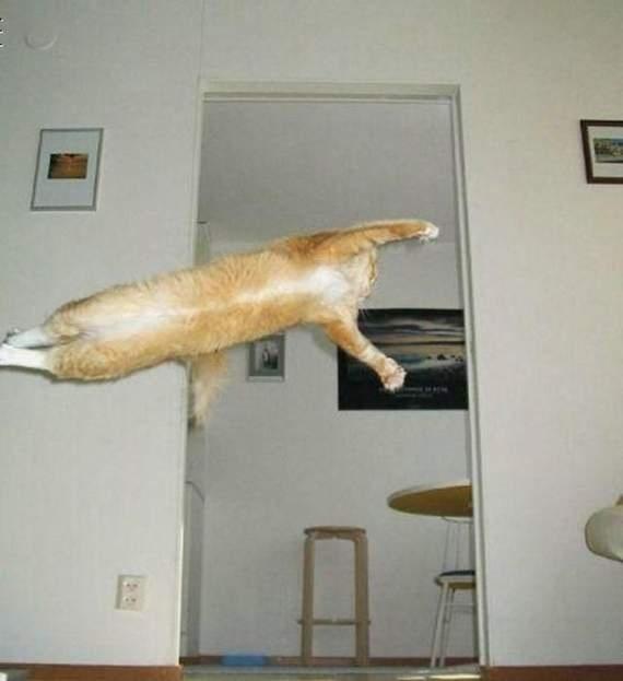 cats 13 Мега фотографии котиков, сделанные в нужный момент