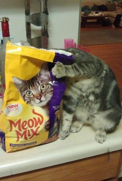 cats 15 Мега фотографии котиков, сделанные в нужный момент