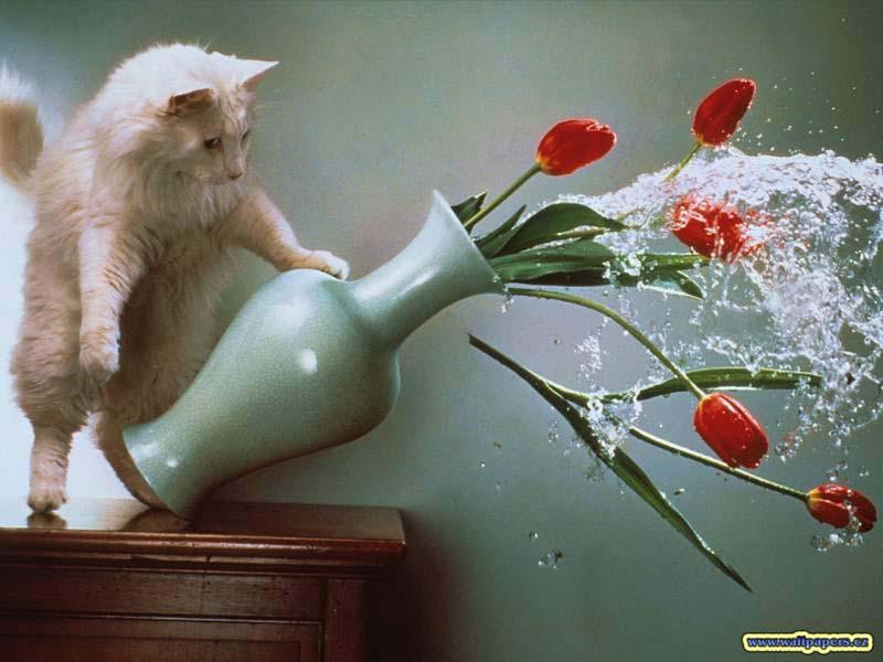 cats 18 Мега фотографии котиков, сделанные в нужный момент