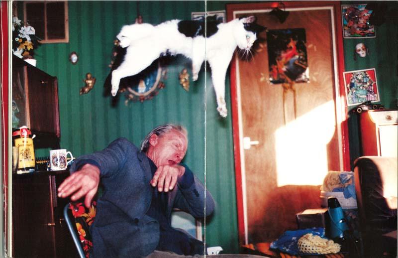 cats 19 Мега фотографии котиков, сделанные в нужный момент