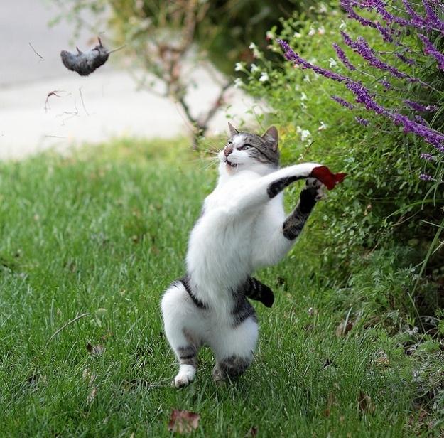 cats 2 Мега фотографии котиков, сделанные в нужный момент