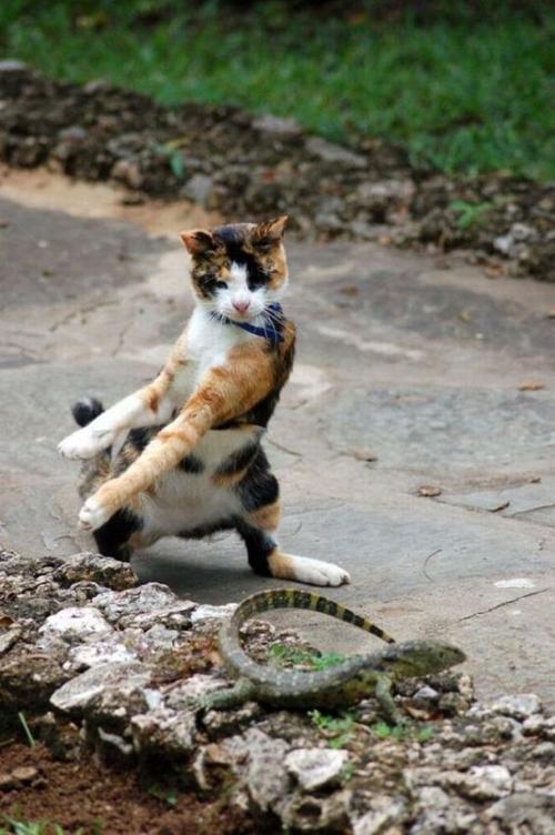 cats 24 Мега фотографии котиков, сделанные в нужный момент