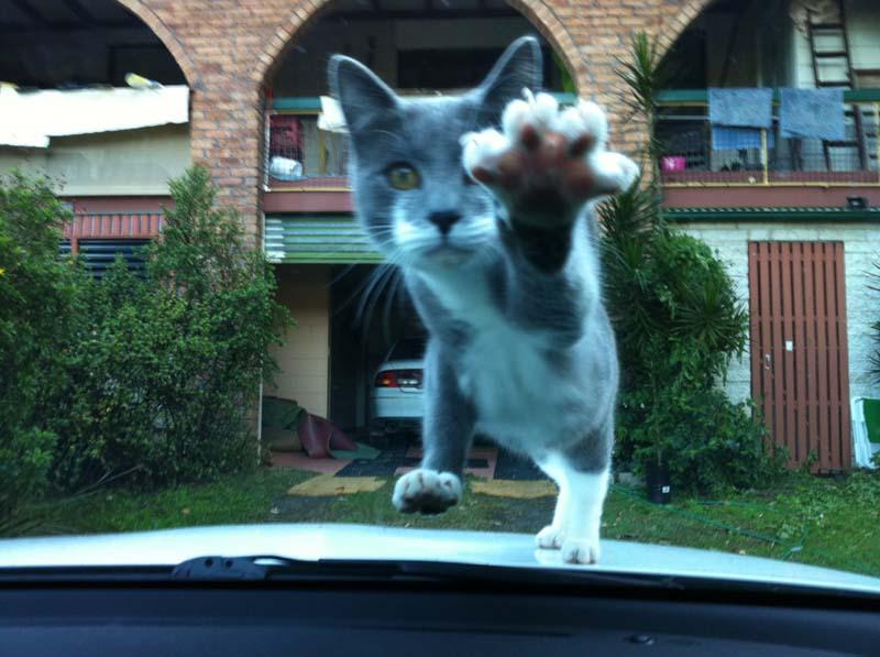 cats 29 Мега фотографии котиков, сделанные в нужный момент