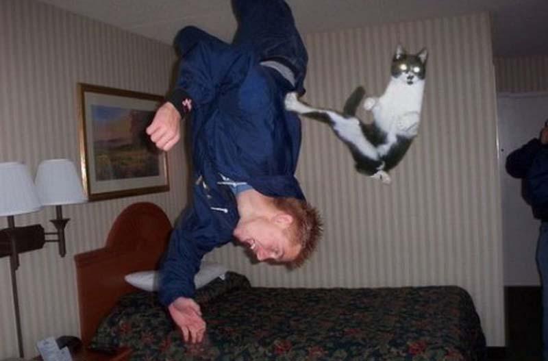 cats 3 Мега фотографии котиков, сделанные в нужный момент