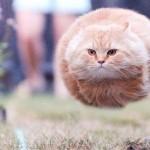 Мега-фотографии котиков, сделанные в нужный момент