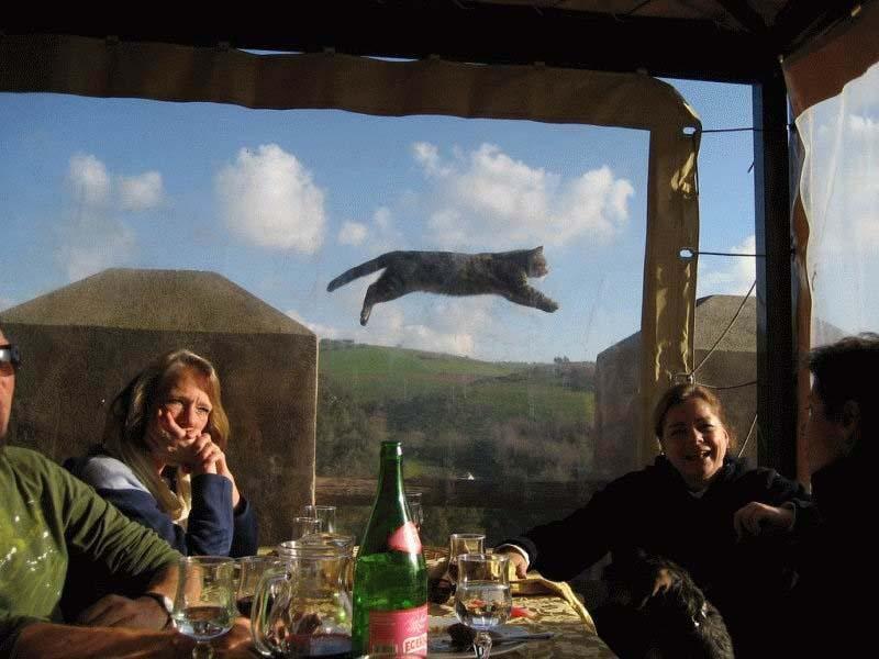 cats 4 Мега фотографии котиков, сделанные в нужный момент