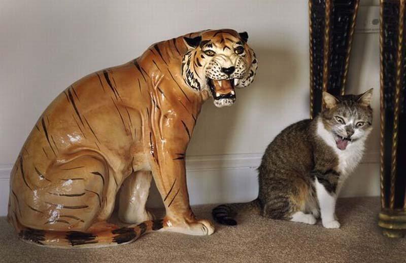 cats 6 Мега фотографии котиков, сделанные в нужный момент