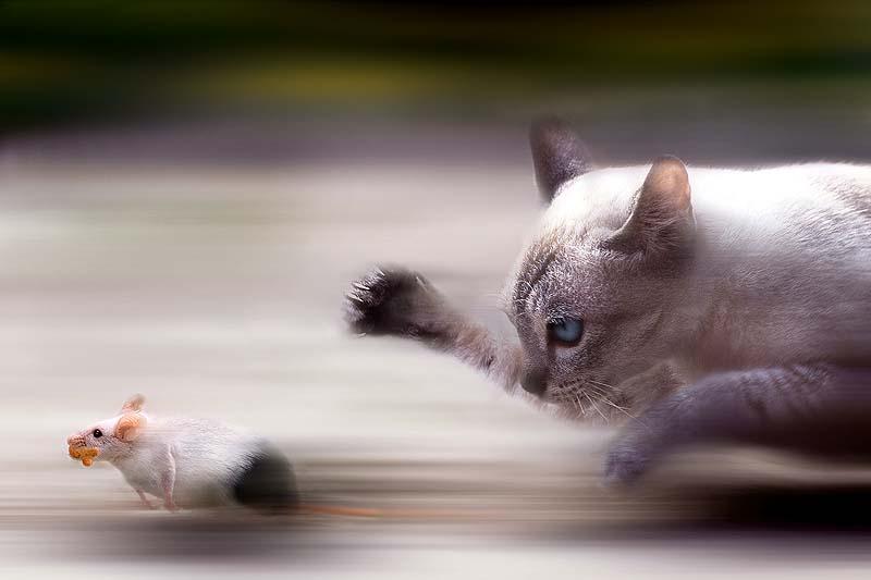cats 7 Мега фотографии котиков, сделанные в нужный момент