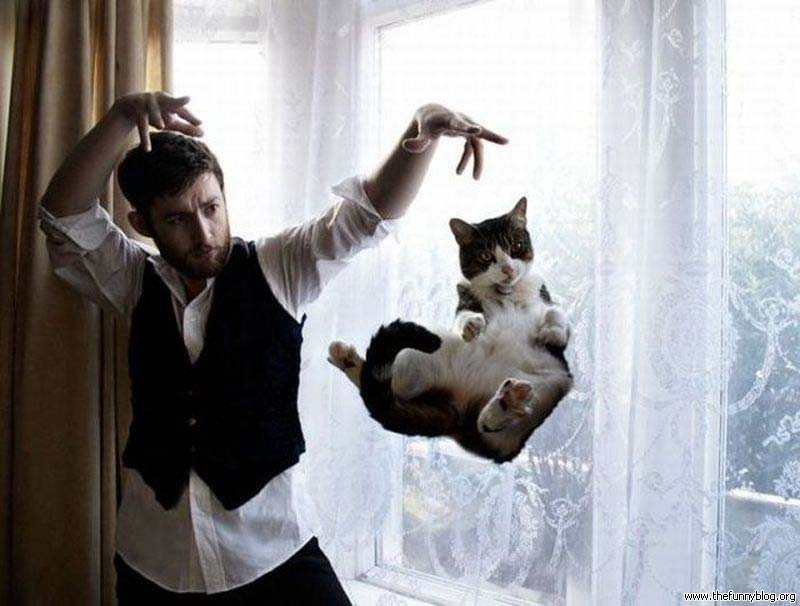 cats 8 Мега фотографии котиков, сделанные в нужный момент