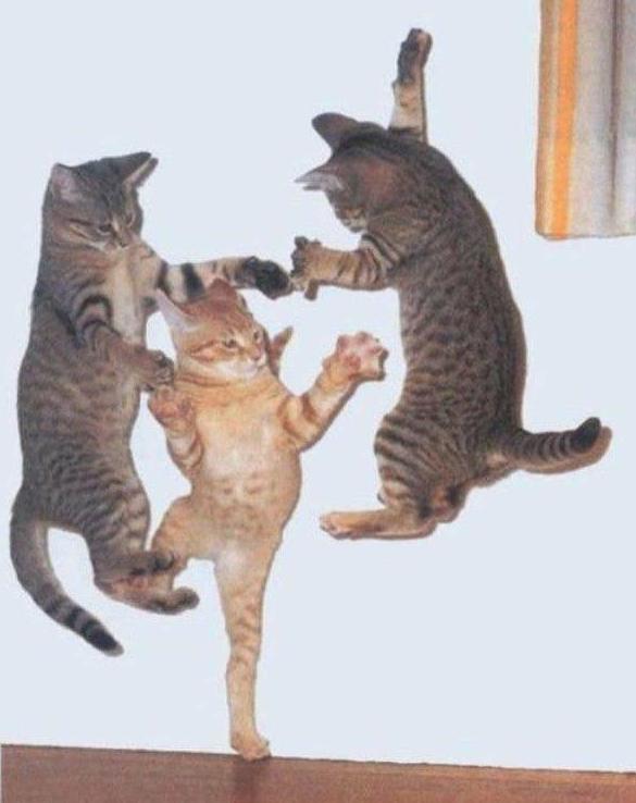 cats 9 Мега фотографии котиков, сделанные в нужный момент