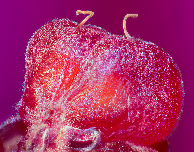 fruits 0 Почему надо мыть фрукты перед едой