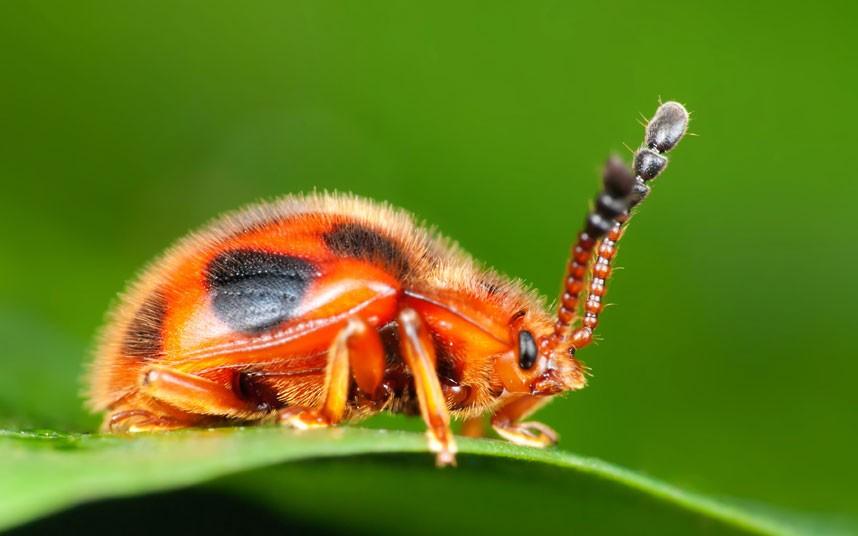 insects 12 Насекомые и мимикрия
