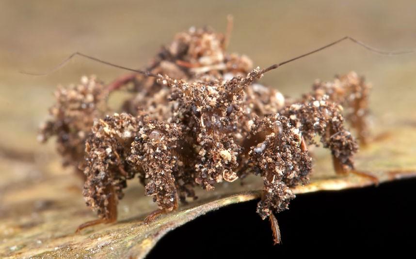 insects 13 Насекомые и мимикрия