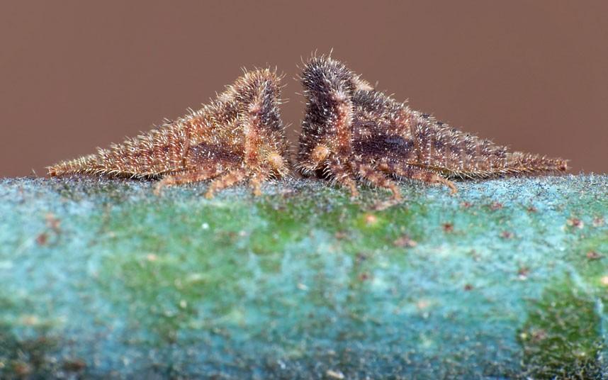 insects 15 Насекомые и мимикрия