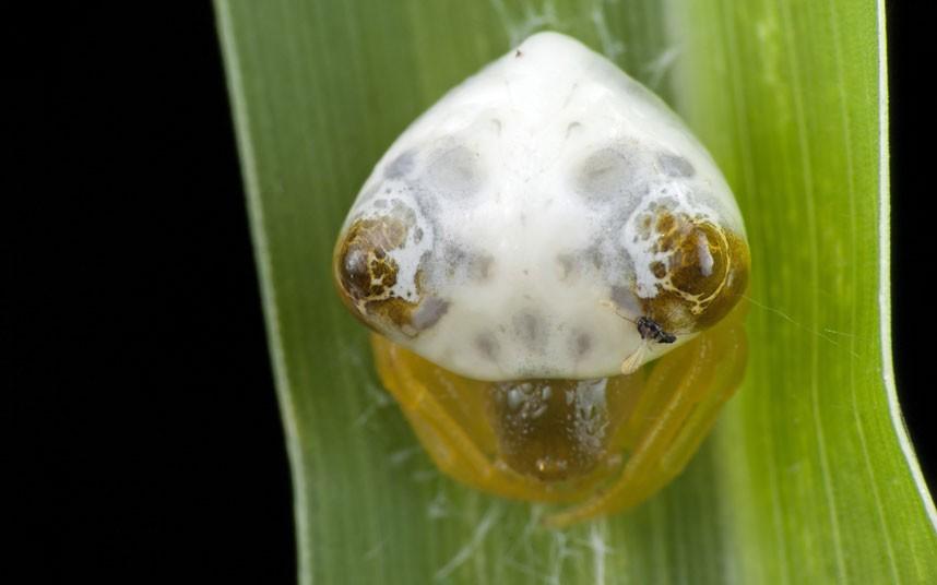 insects 16 Насекомые и мимикрия