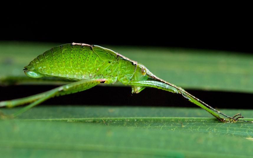 insects 19 Насекомые и мимикрия