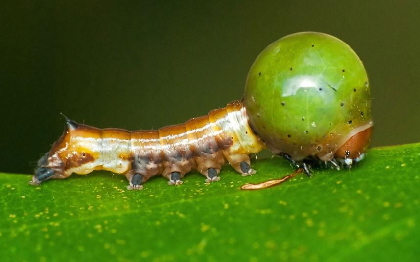 insects 5 Насекомые и мимикрия