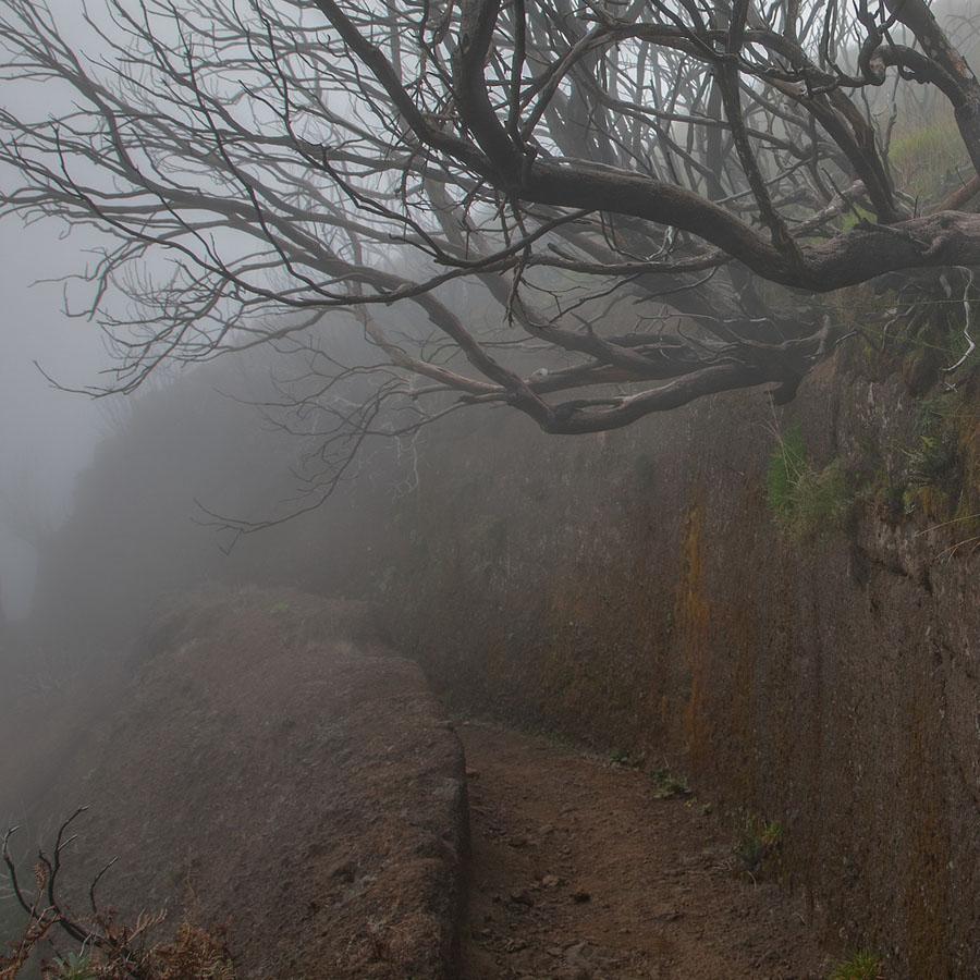 madeira 39 Мадейра, пик Арийэро