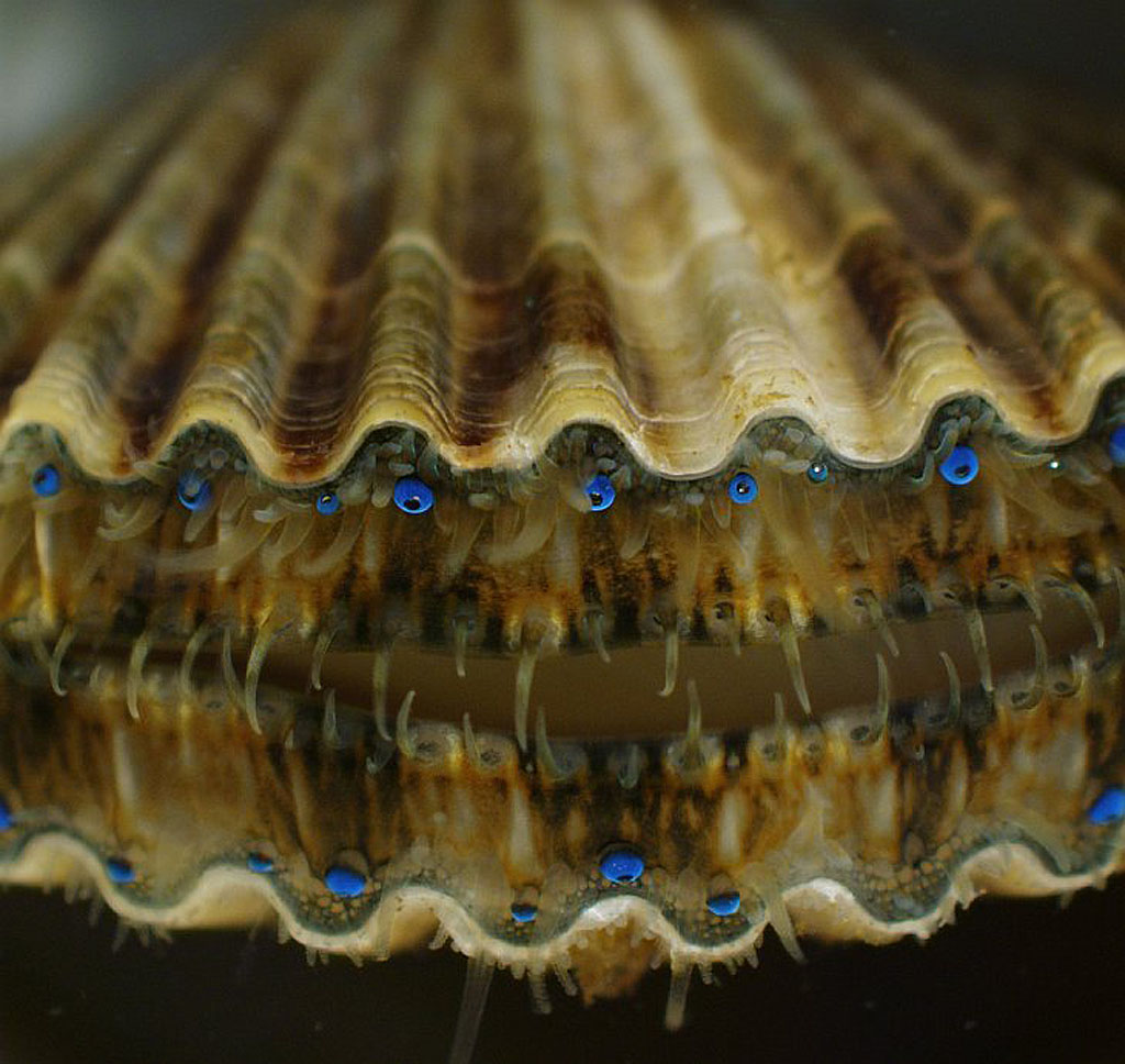 micro 1 Конкурс микрофотографии Olympus BioScapes 2012