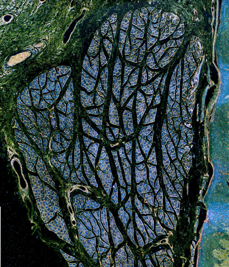 micro 10 Конкурс микрофотографии Olympus BioScapes 2012
