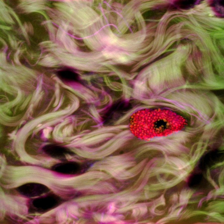 micro 14 Конкурс микрофотографии Olympus BioScapes 2012
