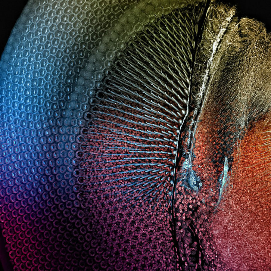 micro 15 Конкурс микрофотографии Olympus BioScapes 2012