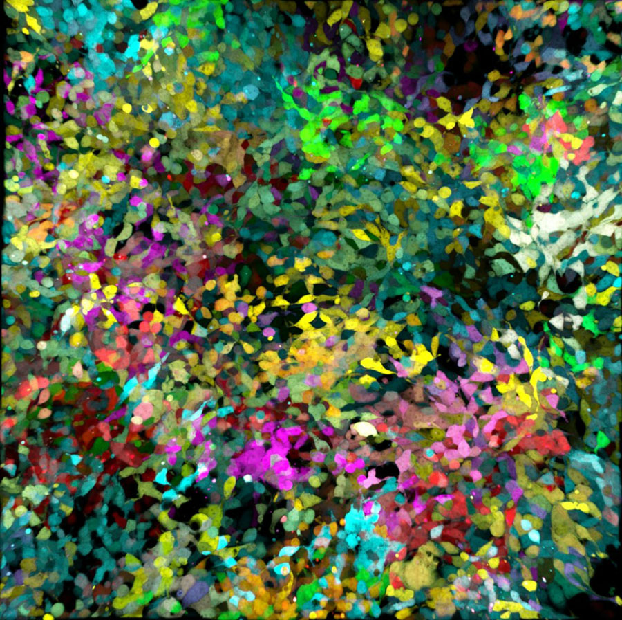 micro 16 Конкурс микрофотографии Olympus BioScapes 2012