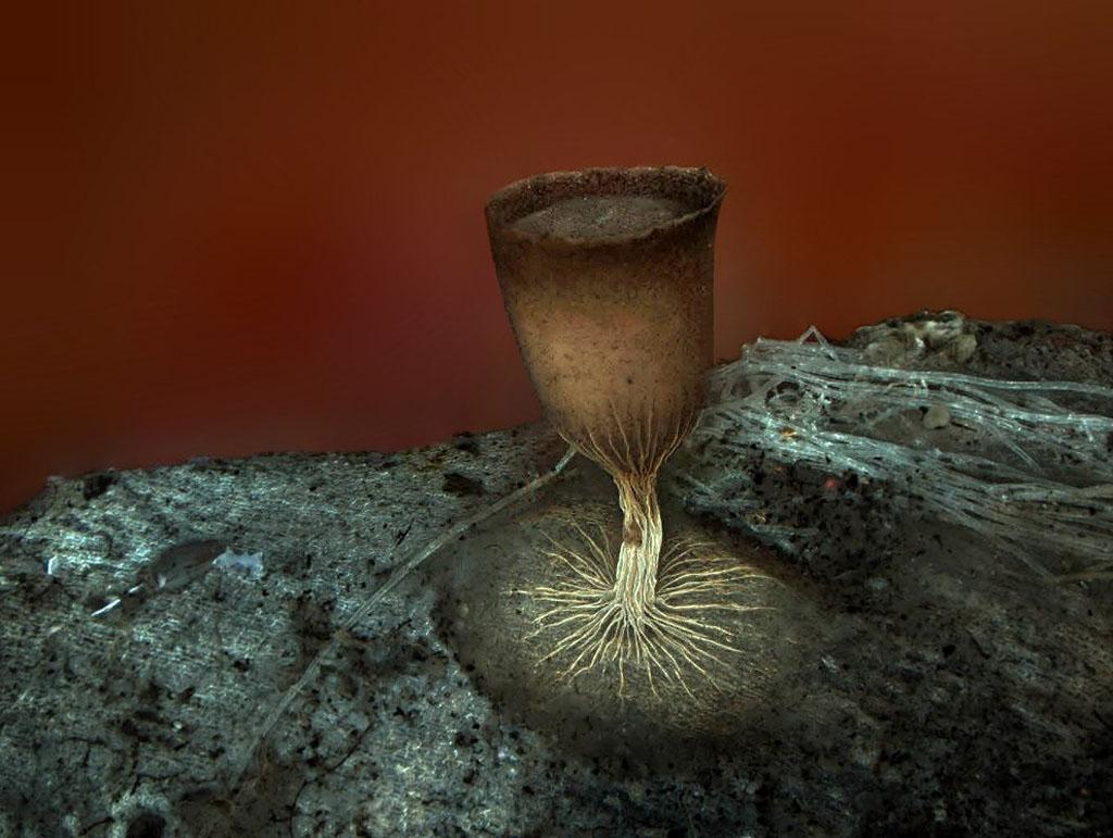 micro 19 Конкурс микрофотографии Olympus BioScapes 2012