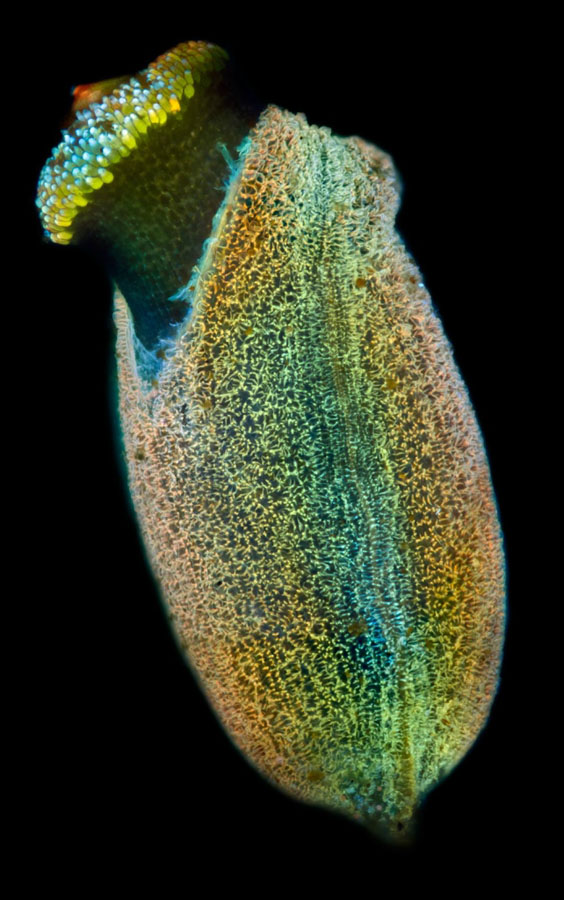 micro 9 Конкурс микрофотографии Olympus BioScapes 2012
