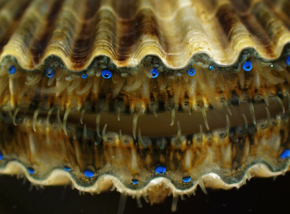 micro15 Под микроскопом