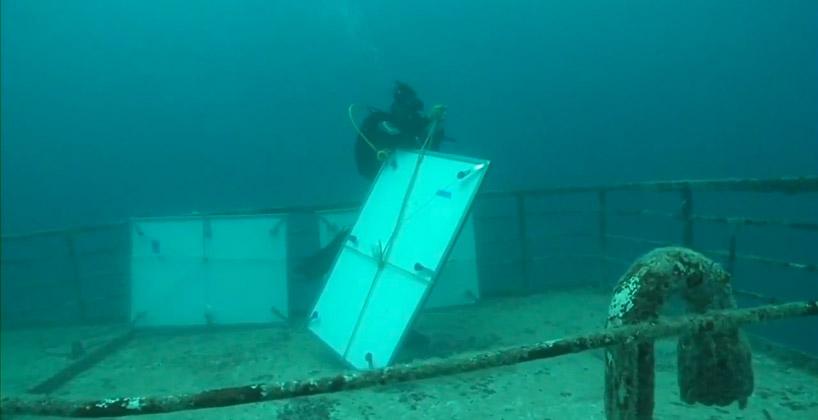 vandenberg13 Подводная выставка фотографий, сделанных под водой