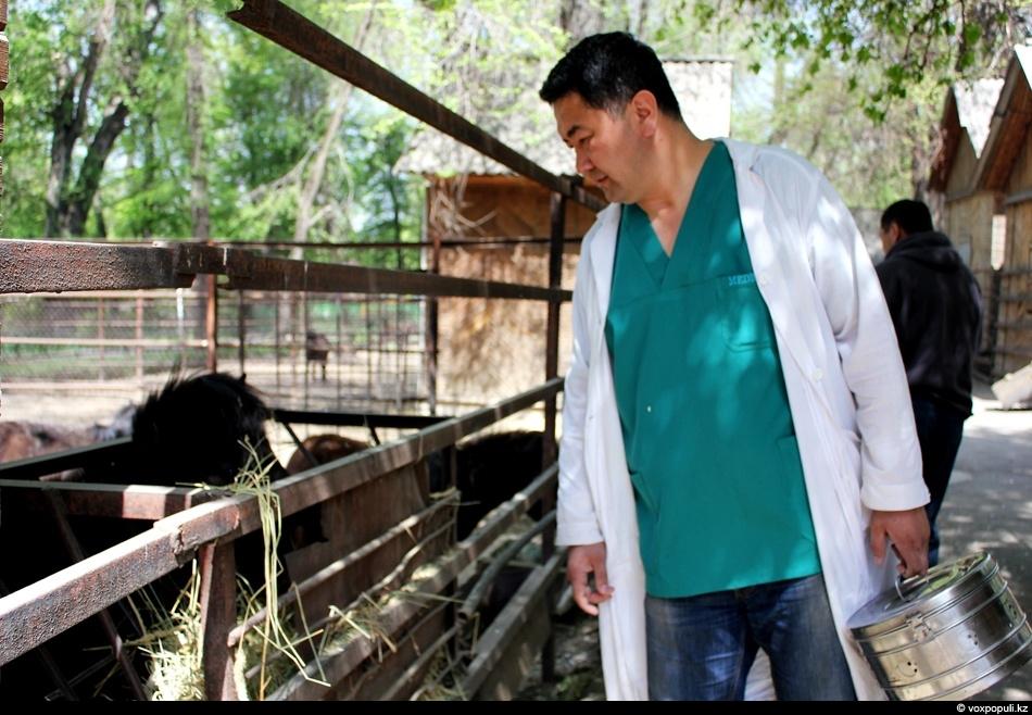 zoo 16 Как вылечить барса?