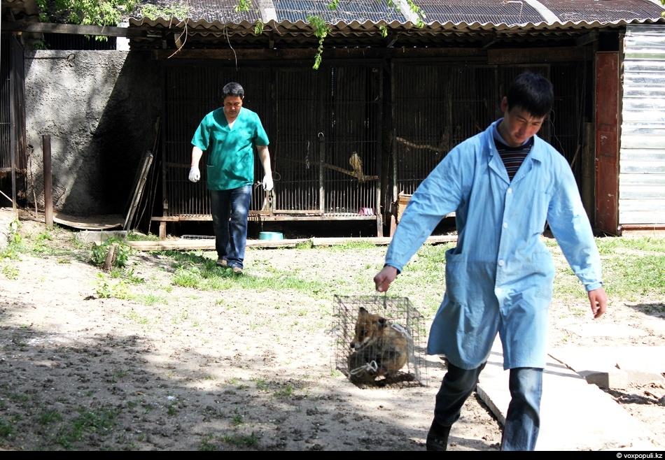zoo 44 Как вылечить барса?