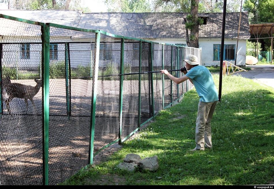 zoo 8 Как вылечить барса?