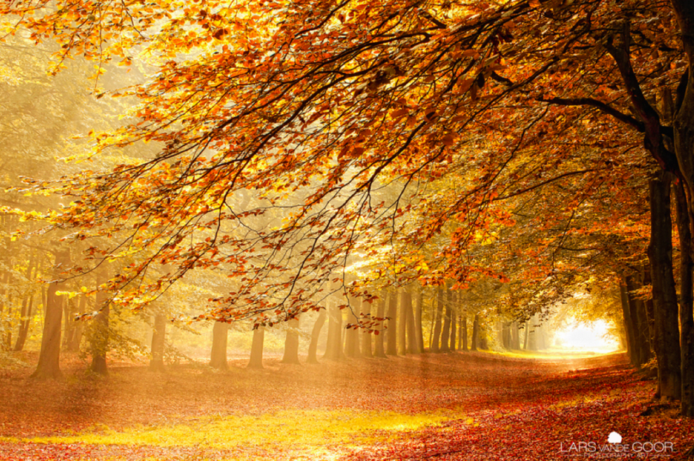 1 Лесные пейзажи Ларса Ван де Гур