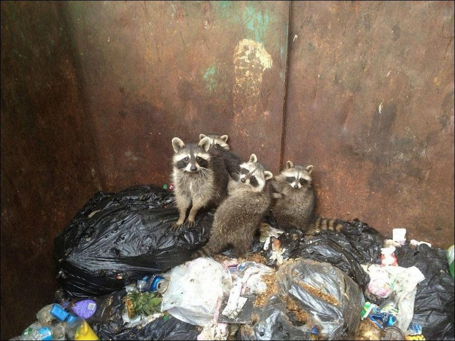 10000000 Енотики в мусорном баке