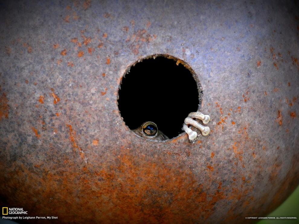 1012 990x742 Обои для рабочего стола от National Geographic за июль 2012