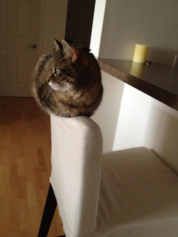 1018 Идеальные места для отдыха   версия для котов
