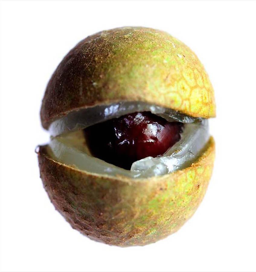 1033 Экзотические фрукты