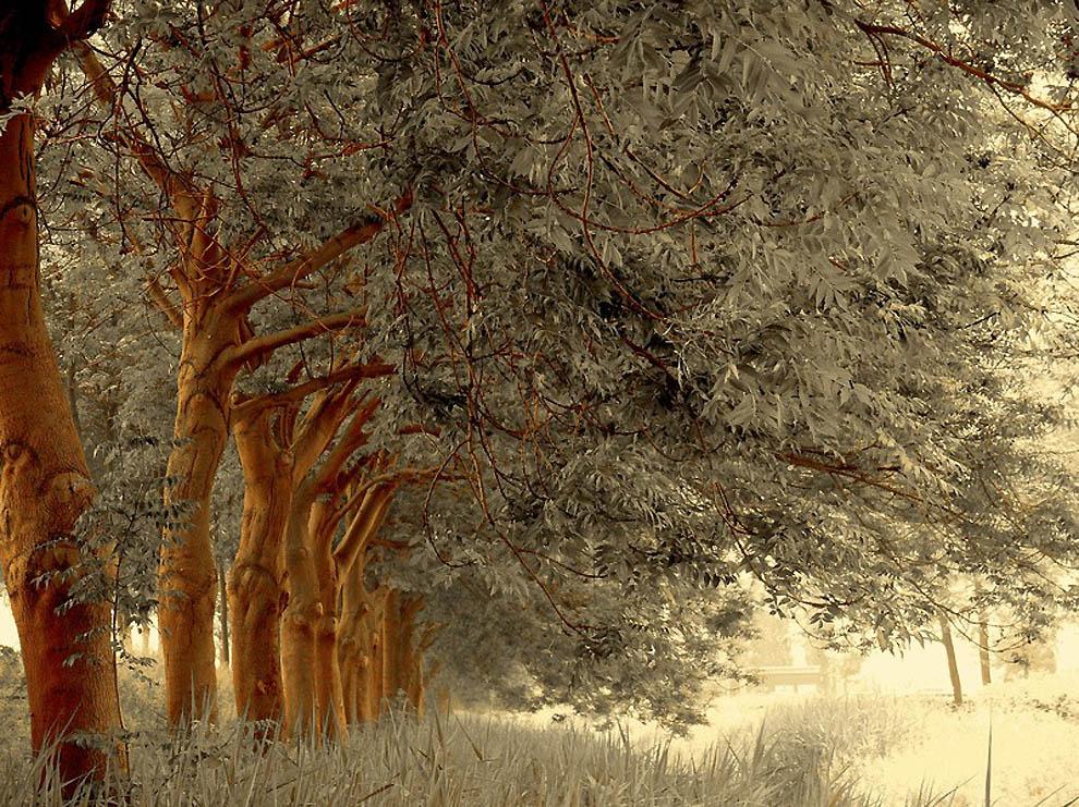 1061 Лесные пейзажи Ларса Ван де Гур