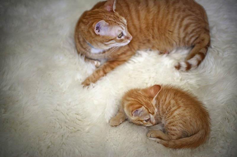 1063 Детские двойники взрослых животных