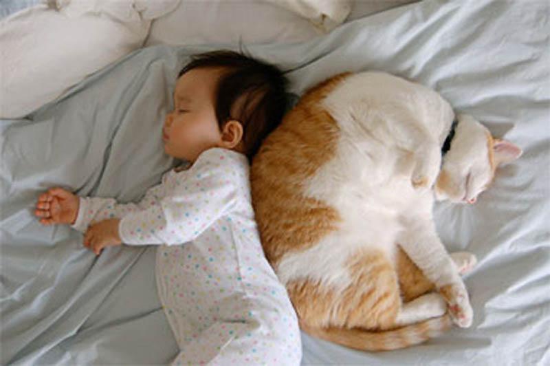 1075 Почему кошки лучше собак