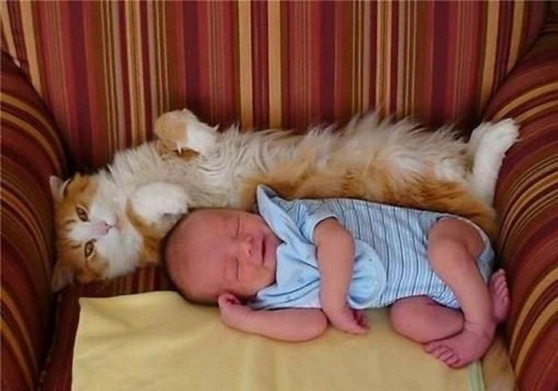 11102 Почему кошки лучше собак