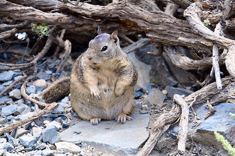 11116 Животные с лишним весом