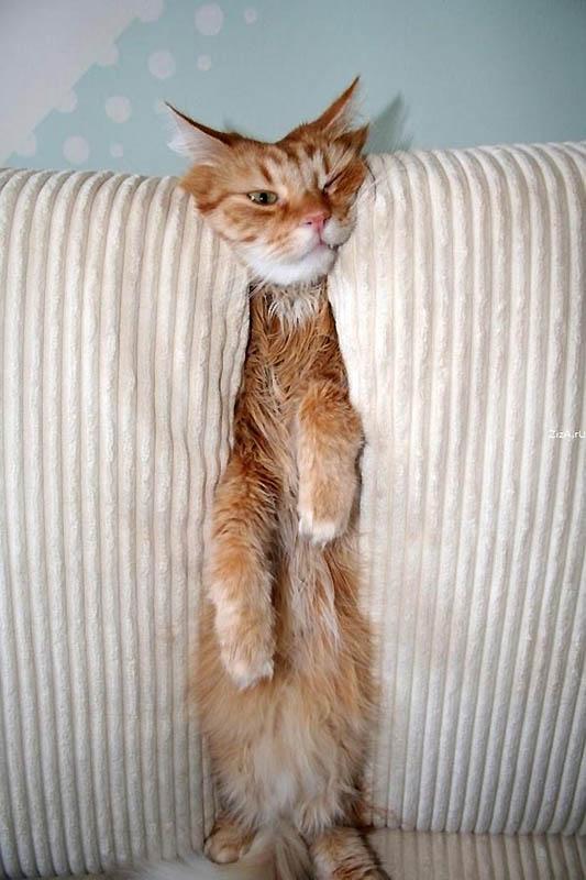 1117 Идеальные места для отдыха   версия для котов